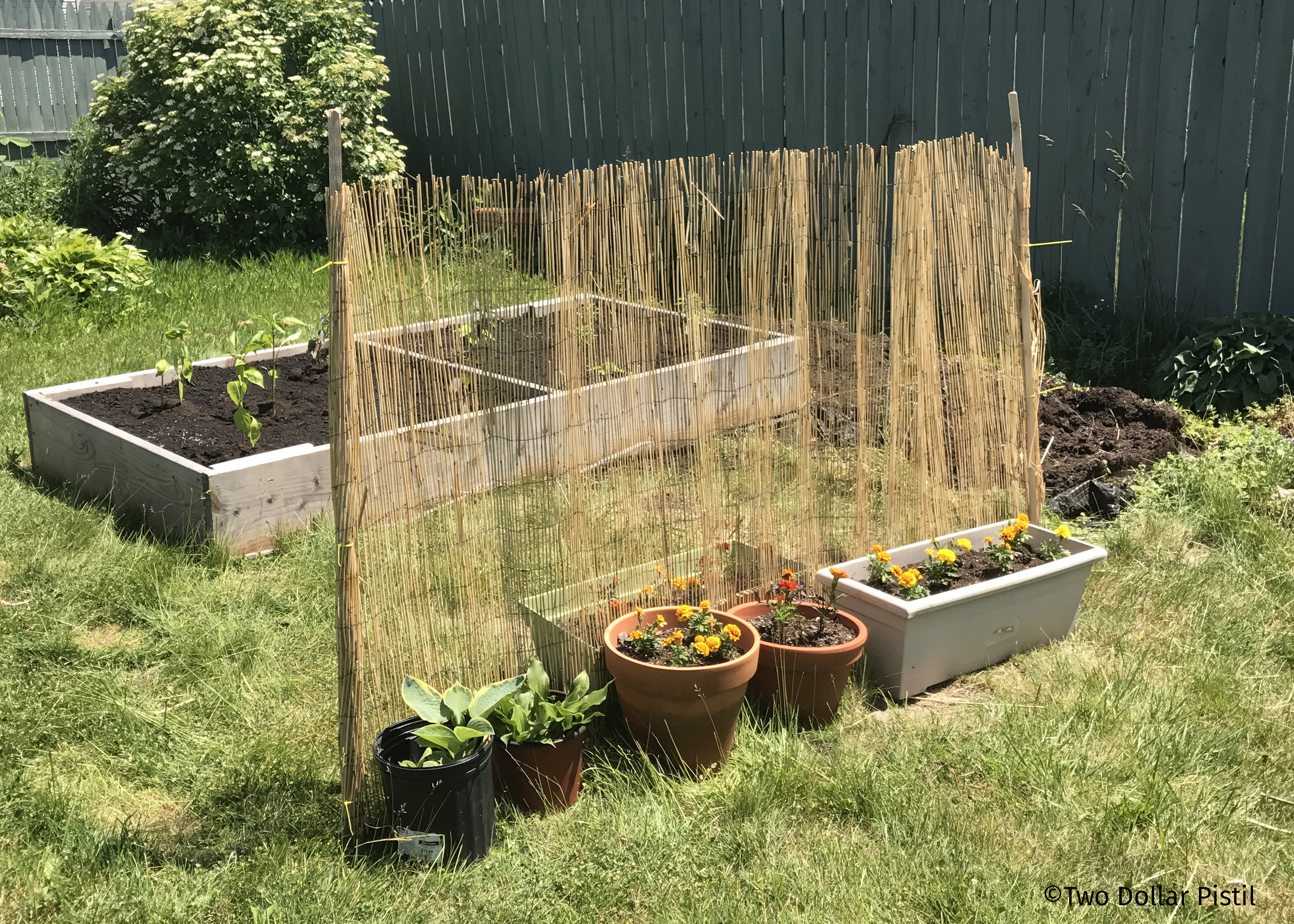 raised vegetable garden 2 0 two dollar pistil